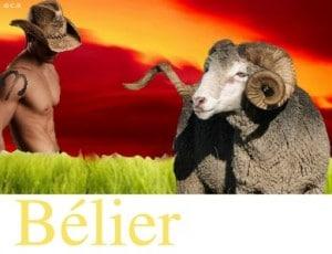 Bélier, Vos Affinités Familiales avec les autres signes
