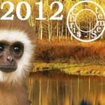 Singe, Votre année 2012