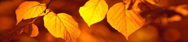 Horoscope amoureux de l'automne 2014