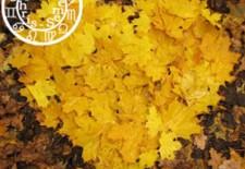 ❧ Votre horoscope amoureux de l'automne ❦