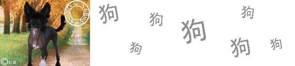 Chien 狗 | Les grandes caractéristiques de votre signe