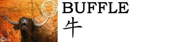 Buffle ou boeuf