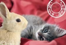 Ⓒhat ou lapin 兔 : Votre Horoscope 2013