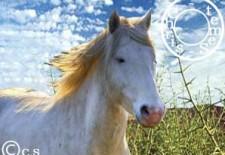 Ⓒheval 馬 : Votre Horoscope 2013