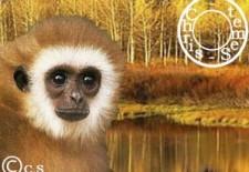 Ⓢinge 猴 : Votre Horoscope 2013