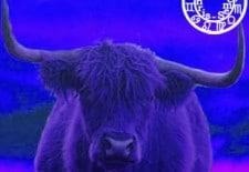 ❀ Horoscope du mois d'août 2013 | Taureau ♉