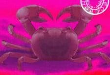 ❁ Horoscope du 17 au 16 juin 2013 | Cancer ❁