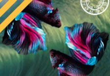✵ Horoscope du 27 mars au 2 avril 2017 | ♓ Poissons ✵