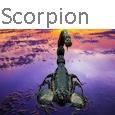 Scorpion Icone