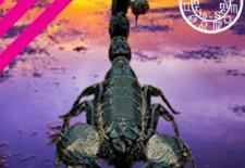 ✮ Horoscope du mois de janvier 2017 | Scorpion ♏