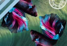 ✵ Horoscope du 20 au 26 mars 2017 | ♓ Poissons ✵