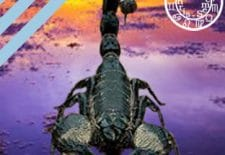✭ HOROSCOPE DU JOUR ✭ SCORPION ✭ du 16 au 22 octobre 2017 ♏