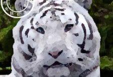 Tigre 虎 | Votre année 2017