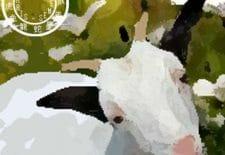 Chèvre ou bouc 羊 | Votre année 2017