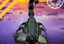 ✵ HOROSCOPE HEBDO ✵ du 8 au 14 mai 2017 ✵ ♏ SCORPION ✵