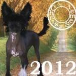 Chien, Votre année 2012