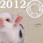 Cochon ou Sanglier, Votre année 2012
