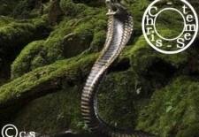 Ⓢerpent 蛇 : Votre Horoscope 2013