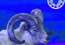 ❀ Horoscope du mois de mai 2013   Bélier ♈
