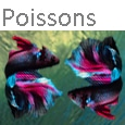 Poissons icone