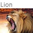 Lion Icone