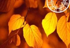❤ Votre horoscope amoureux de l'automne 2014 ❤