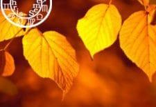 ♥♡ Votre horoscope amoureux de l'automne ♡♥