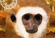 Singe 猴   Votre année 2017